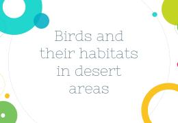 قالب پاورپوینت PowerPoint Birds